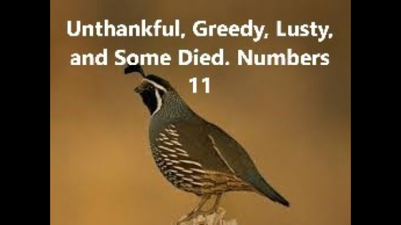 Unthankful Greedy Lusty and Some Died Numbers 11