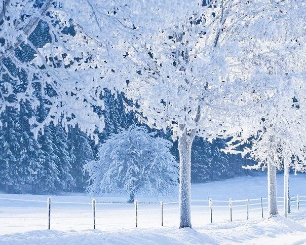 Снежные Обои На Телефон