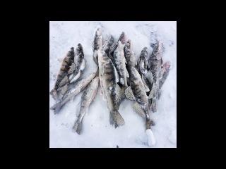Крещенская рыбалка, Бёрш на тюльку 2018 GoPro