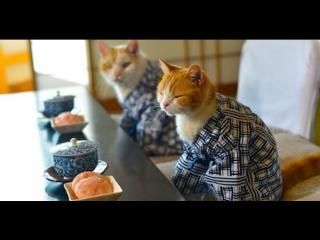 Заседание J-cafe, посвящённое кошкам 猫