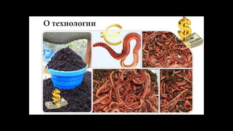 Вермиферма Технолог Михаил Бондаренко