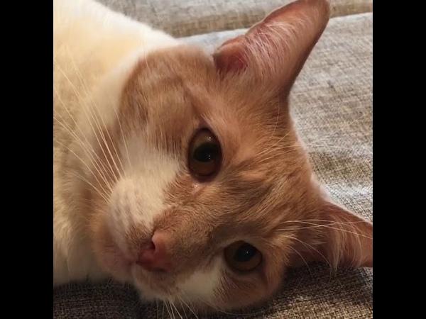 1271 05 02 2016 нашел дом кот Мэлман видео из дома