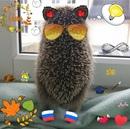 Фотоальбом человека Руслана Пронькина