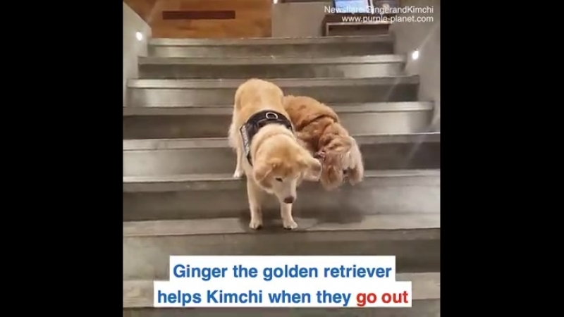 Daily Mail - This blind dog has his own service dog to guide him when he goes out ️