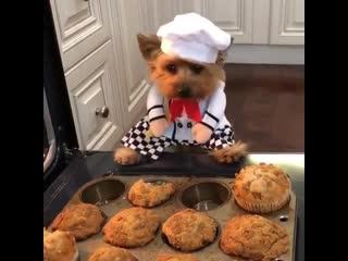 Пушистый кулинар