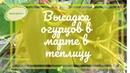 Посадка рассады огурцов в теплицу под пленку в марте Марценюк Надежда