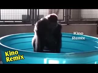 плагиат очевиден Ольга Бузова водица ржач до слез горилла танцы клипы 2019 приколы с животными