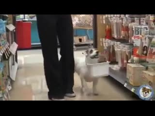 Toller hund....