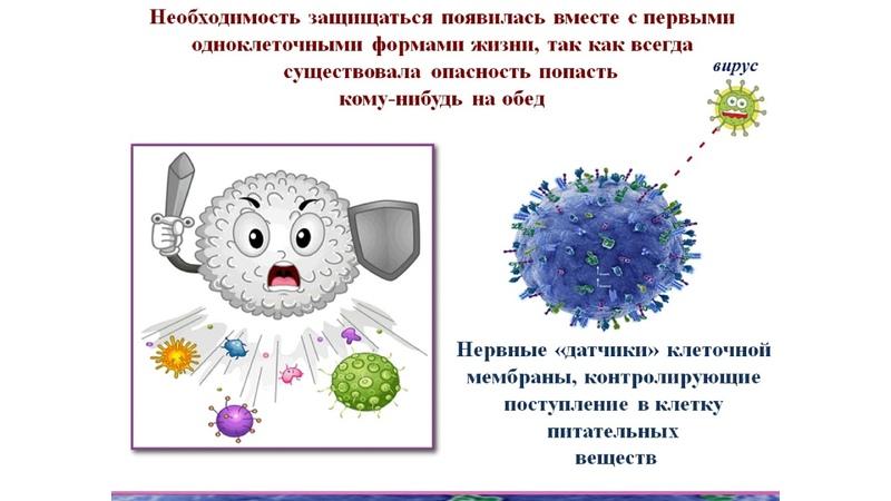 Байкулова Короновирус