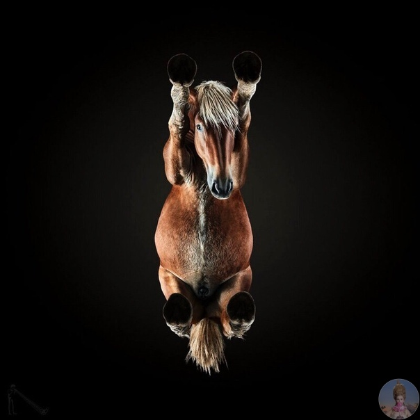 «Однажды мне пришла в голову сумасшедшая идея  сфотографировать лошадь снизу