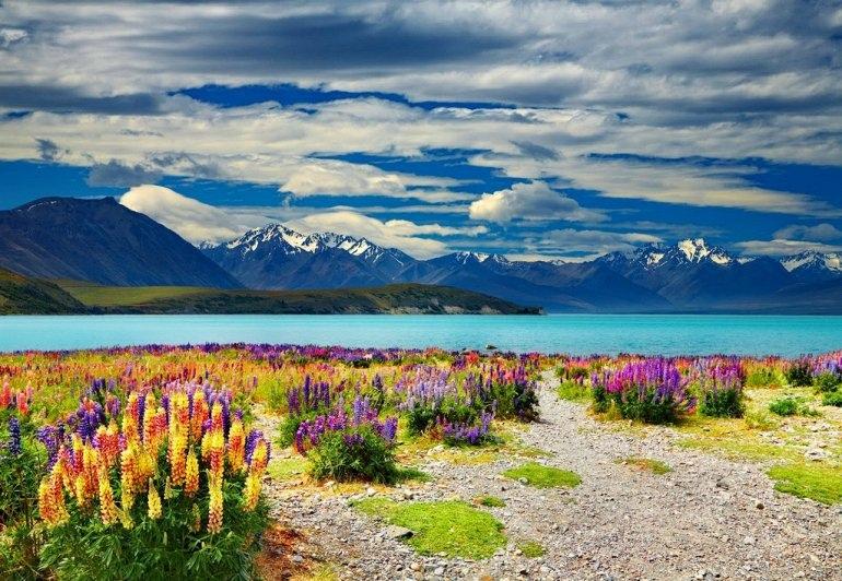 Потрясающей красоты озеро Текапо (Новая Зеландия)