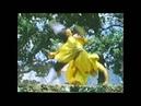 Shaolin v Lama 1983 Chang Shan vs Lo Rei shadow fist