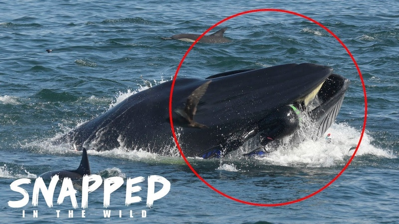I Was Spat Out By A Whale | SNAPPED IN THE WILD