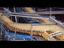 Dünyanın En Büyük Bira Fabrikasında otomatik üretim