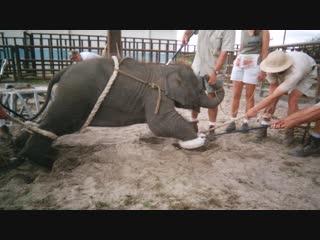 Как в цирке убивают животных?