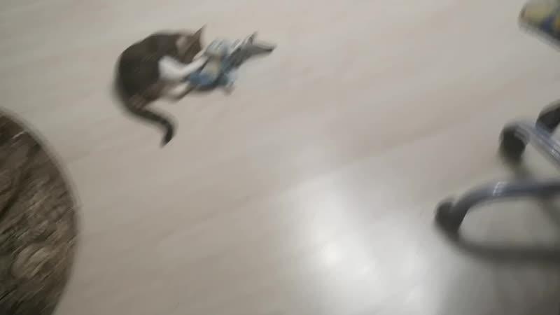 Редчайшие кадры: кот, акула и обезьяна