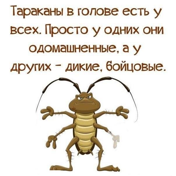 общаються кто тараканы в голове картинки прикольные у мужчин объектов сайте