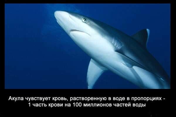 Valteya - Интересные факты о акулах / Хищники морей.(Видео. Фото) - Страница 2 B0AH70kQaTc