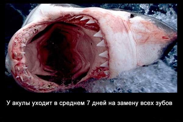 Valteya - Интересные факты о акулах / Хищники морей.(Видео. Фото) - Страница 2 VvtHpenLO6c