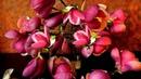 Pavasara ziedu noskaņa