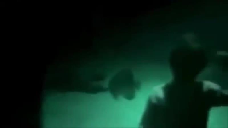 В море неизвестное существо подплыло к окну океанариума