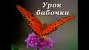 Урок бабочки - притча