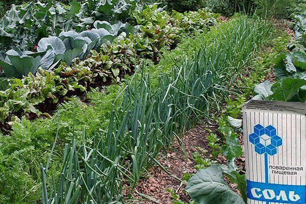 Использование соли в огороде!