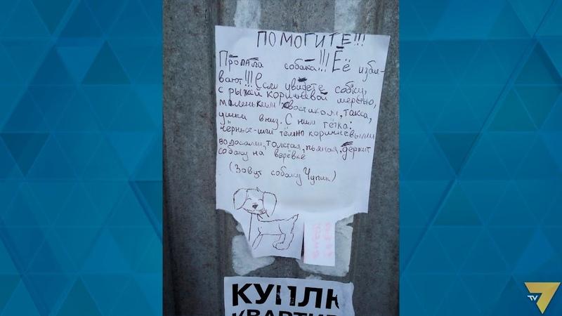 В Маріуполі дитина розклеїла оголошення про загубленого собаку
