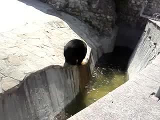 Мишка пошел купаться