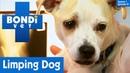 Ветеринар Бондай Бич Собака не может правильно бегать 1 сезон 1 серия Dog Can t Run Properly S01E01 Bondi Vet