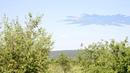 чужой появился в Беларусь в небе страной фигурой.