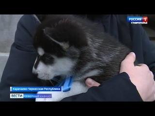 Школьник из Карачаево-Черкесии получил подарок от Владимира Путина