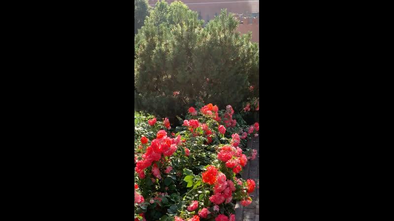 Александровский сад 7 июля 2020 8 ч утра КРАСОТА