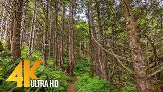 Amazing Oregon Waterfalls in 4K - Nature Walking Tour with Relaxing Forest Sounds