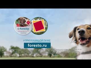 Узнайте, как работает ошейник Foresto