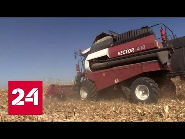 Рекордный урожай пшеницы: ДНР обеспечила себя хлебом на 100 процентов - Россия 24