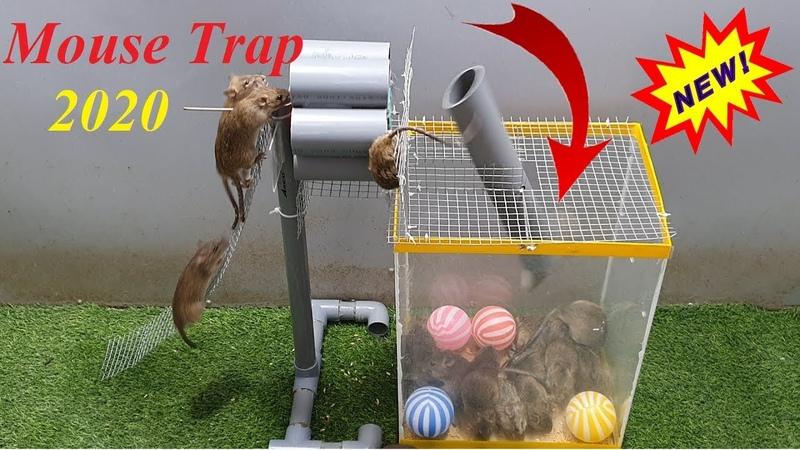 Jenis baru perangkap tikus pada tahun 2020 /Perangkap tikus DIY terbaik dari pipa plastik/Rat trap