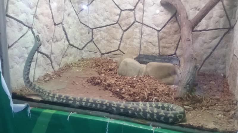 Зоопарк Лукоморье Голубицкая
