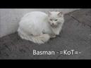 =KoT= BASMAN