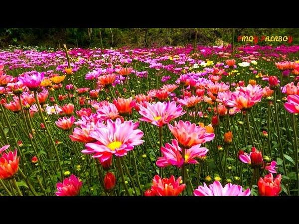 EDENS FLOWER FARM Hidden Paradise in Tupi South Cotabato