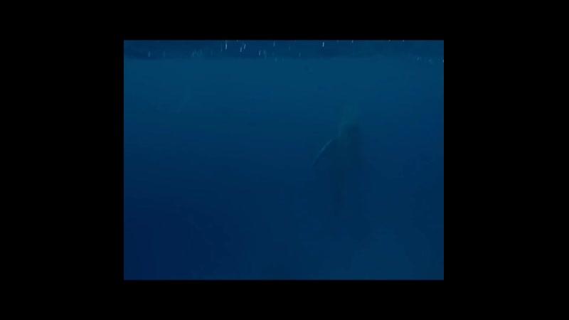 синие киты vacuum.mp4