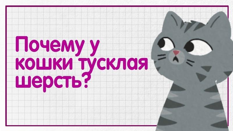 Почему у кошки тусклая шерсть и перхоть WHISKAS® К Т У