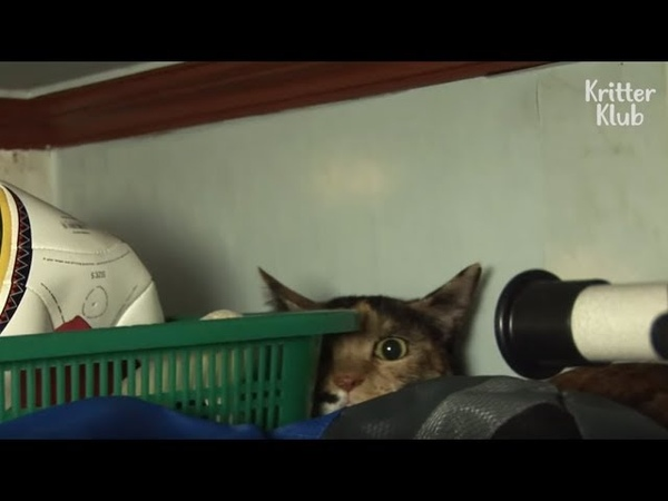 The Sad Reason Why This Cat Keeps Hiding In The House, Trembling In Fear Is.. | Kritter Klub