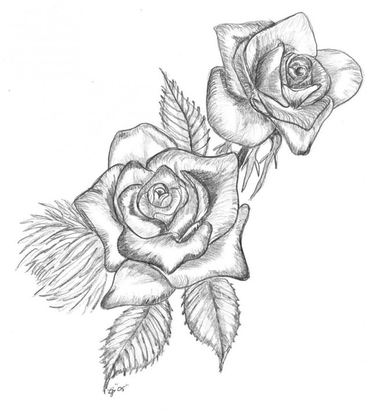 drawings of roses - HD1180×1298