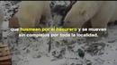 Invasión de osos polares fenómeno que va más allá del cambio climático - Gaceta UNAM