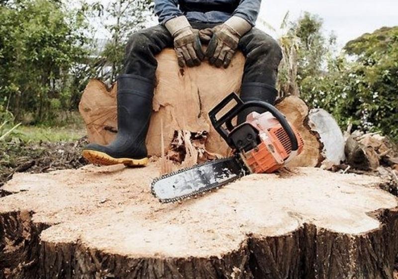 Правительство КЧР и Минприроды РФ призывают прекратить вырубки леса в Архызе