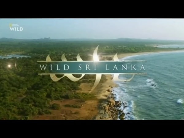 National Geographic WILD Дикая Шри Ланка Берег гигантов