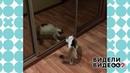 Кошка взазеркалье. Видели видео? Фрагмент выпуска от15.09.2019
