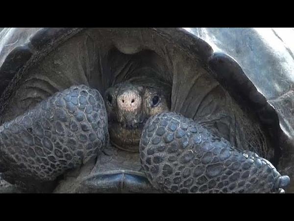 Обнаружена черепаха считавшаяся вымершей