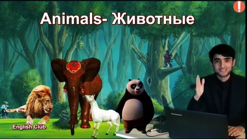 Дарси 9 Дар бораи Хайвонтхо бо забони Англиси Lesson 9 about different animals